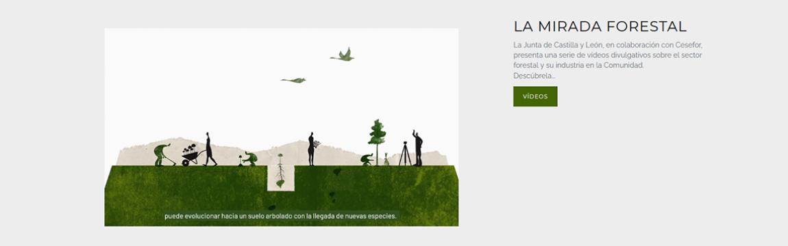 Serie divulgativa sobre el sector forestal y su industria en Castilla y León. Junta de Castilla y León