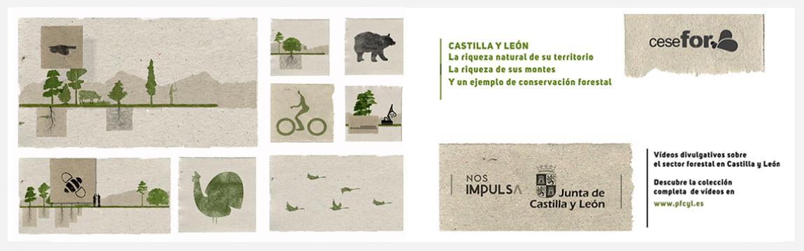 Vídeos divulgativos del sector forestal en Castilla y León